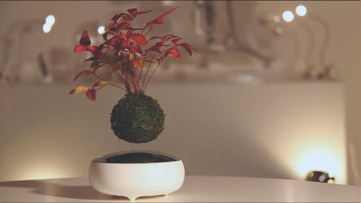 Air Bonsai Floating bonsai tree float favorite plant