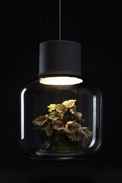 Ingenious solution to growing plants in poorly lit apartments