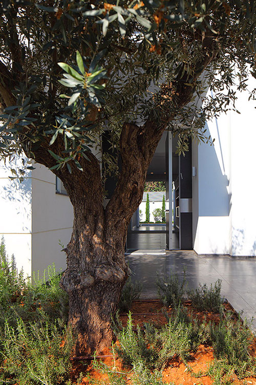 Bright and cozy family home with beautiful garden in Israel by Blumenfeld Moore Architects