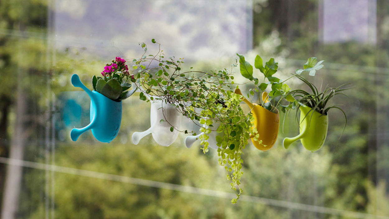 Livi adorable little planters suction cup