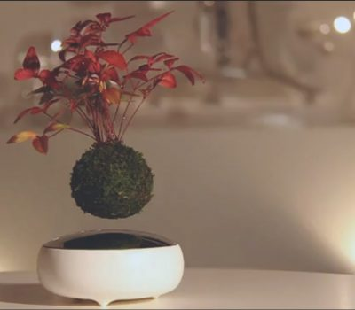 Air Bonsai Floating bonsai tree float favorite plant