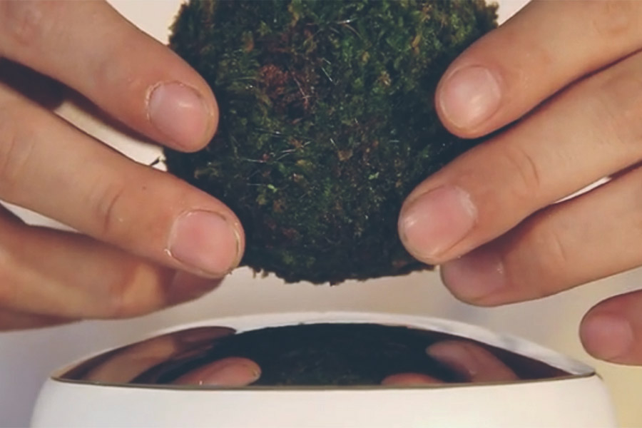 Air Bonsai lets you levitate favorite plant