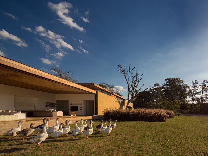 Ducks walking near sustainable house with modern architecture in Sao Paulo, Brazil