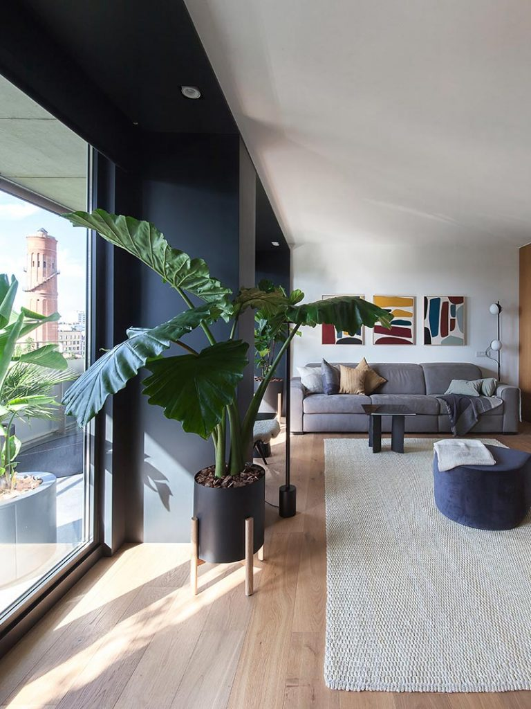 Plants are must-have accessories for every modern living room